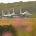 Photos: F-15 line up(1)