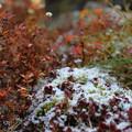 初雪 (1)