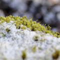 Photos: 初雪の朝に(2)