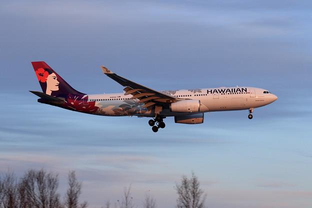 A330 Hawaiian N383HA 夕陽に染まる