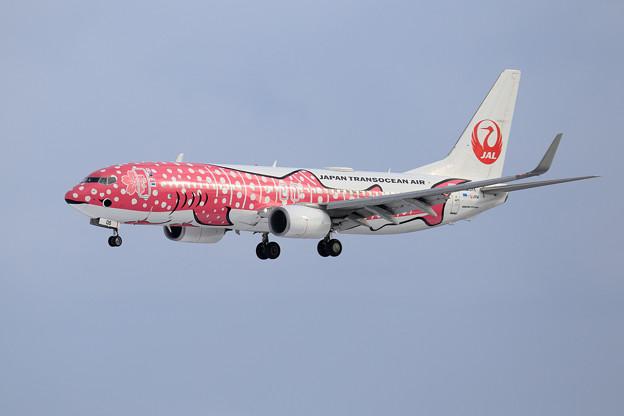 Boeing737 JTAの桜ジンベイが飛来(1)