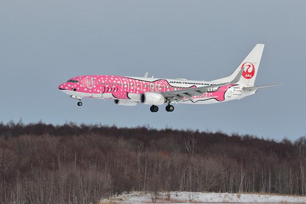 Boeing737 JTAの桜ジンベイが飛来(2)