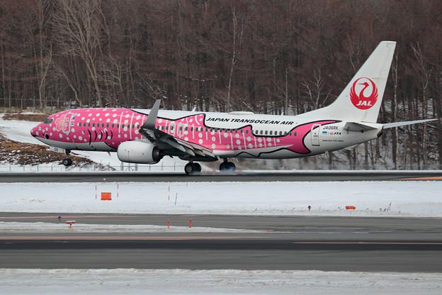 Boeing737 JTAの桜ジンベイが飛来(3)