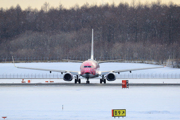 Boeing737 JTAの桜ジンベイが飛来(4)