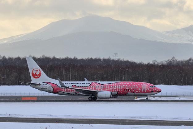 Boeing737 JTAの桜ジンベイが飛来(5)
