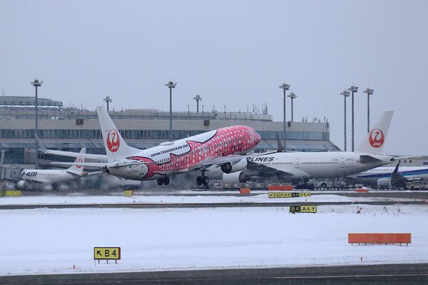 Boeing737 JTAの桜ジンベイが飛来(6)