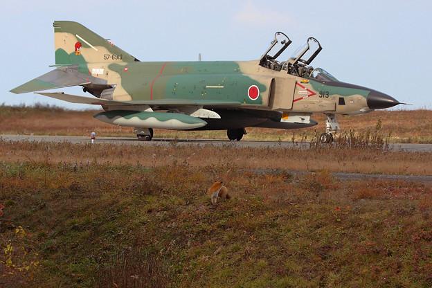 RF-4E 57-6913とキタキツネ 2010.10