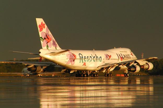 B747-200 JA8150 JALways 2004.08 (2)
