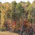 カラマツ林と紅葉