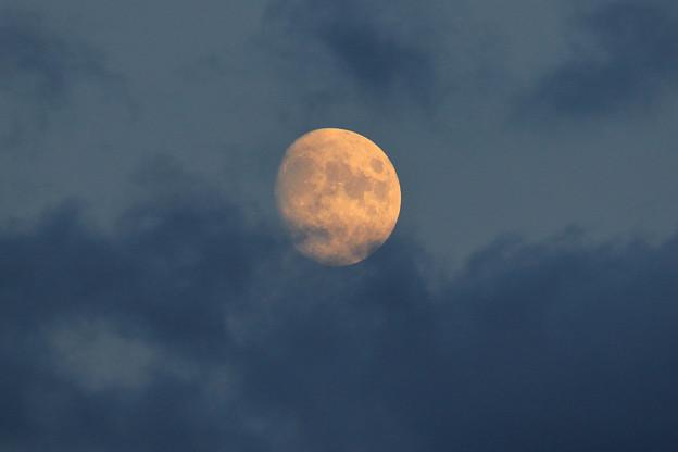 明日の月は栗名月