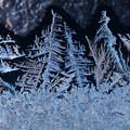 Photos: 窓霜