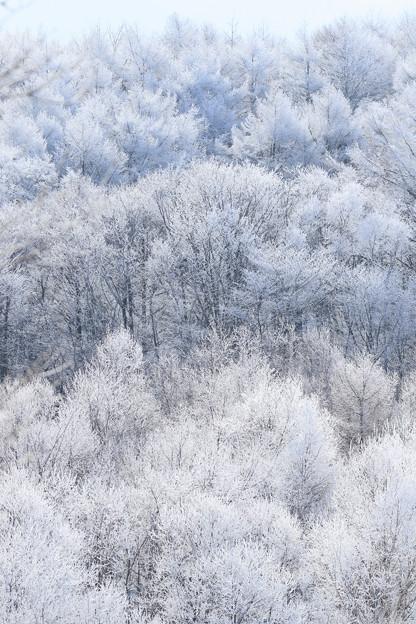 真白き木々(2)