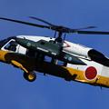 Photos: UH-60J 4557 Chitose AB 50annv 2007(2)