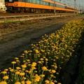 写真: 夕刻の近鉄大阪線