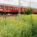 写真: 小菊と鮮魚列車