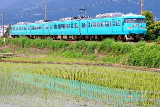 写真: 117系:和歌山線