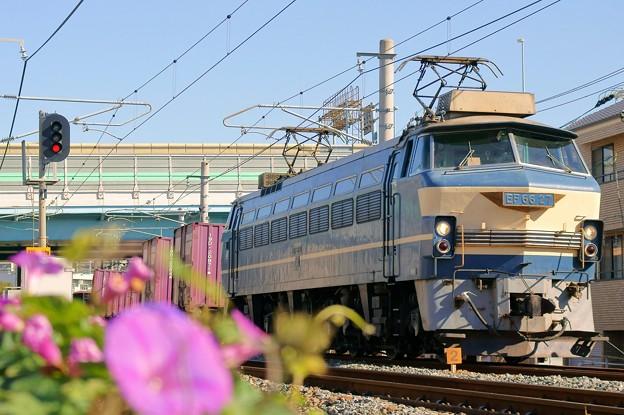 Photos: 1081レ【EF66 27牽引】