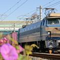 1081レ【EF66 27牽引】