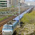 Photos: 2059レ【EF66 105牽引】