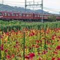 Photos: 鮮魚列車(系統板&団扇付き)