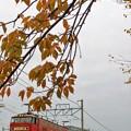 Photos: 2080レ【EF510-19牽引】