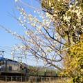 56レ【EF210-103牽引】