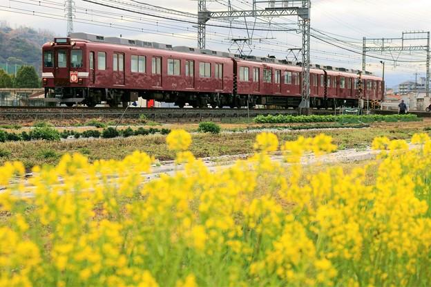 鮮魚列車@菜の花畑