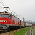 Photos: 1086レ【EF510-4牽引】