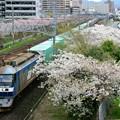Photos: 1051レ【EF210-143牽引】