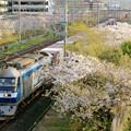 Photos: 69レ【EF210-123牽引】