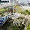 Photos: 4058レ【EF510-513牽引】