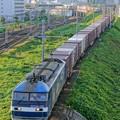 Photos: 63レ【EF210-159牽引】