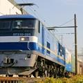 Photos: 73レ【EF210-325牽引】