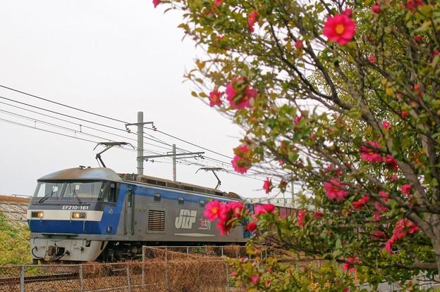 EF210-161【5074レ】