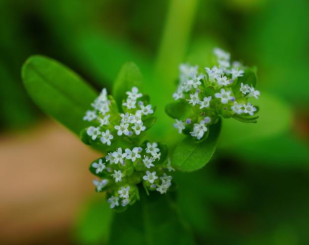 写真: 極く小さな草花