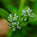 極く小さな草花