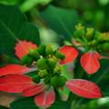 Photos: 暑さに咲く