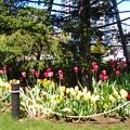 Photos: 横浜花のイベント