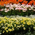 Photos: 横浜花のイベント4
