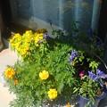 猛暑を乗り切った花たち2019