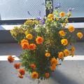 お花を育てて半年経ちました