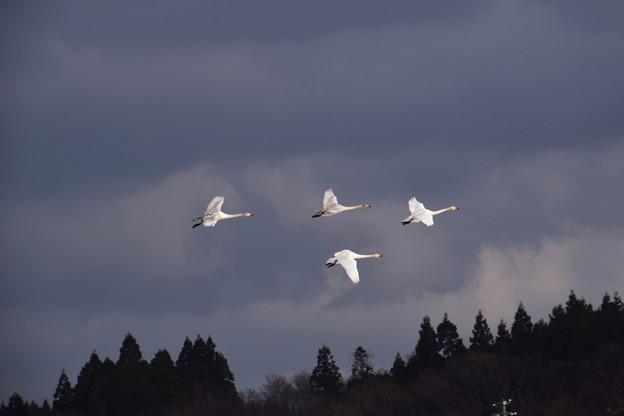 白い羽 ぴかぴか♪