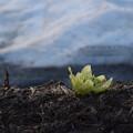 写真: 春♪