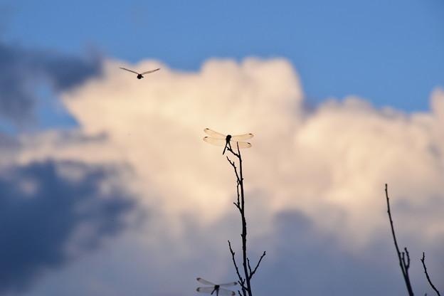 Photos: 秋の空♪