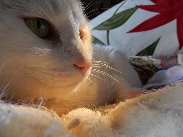 うちの猫サマ♪