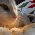 Photos: うちの猫サマ♪