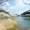 Photos: 庭木ダム桜 5