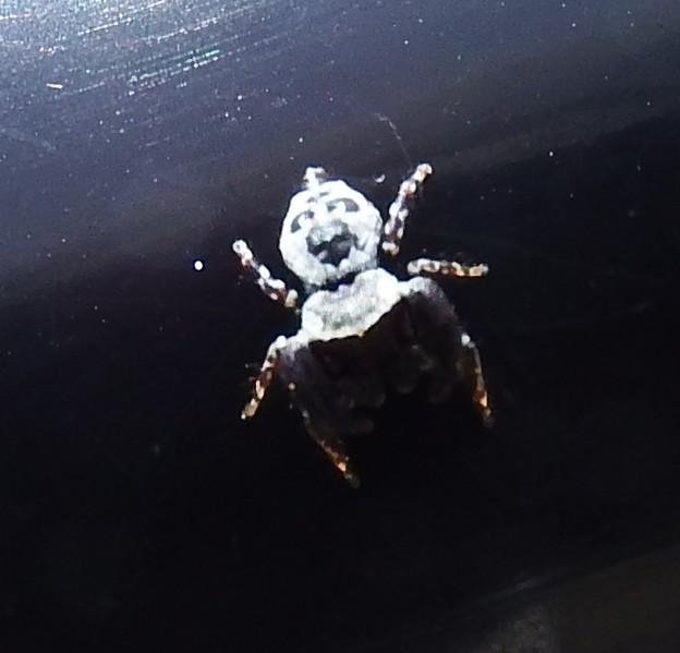 小さな蜘蛛