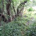 Photos: 202000814 kotsukotsu tunnel 008
