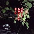Photos: 20201104 asima yamagoya007